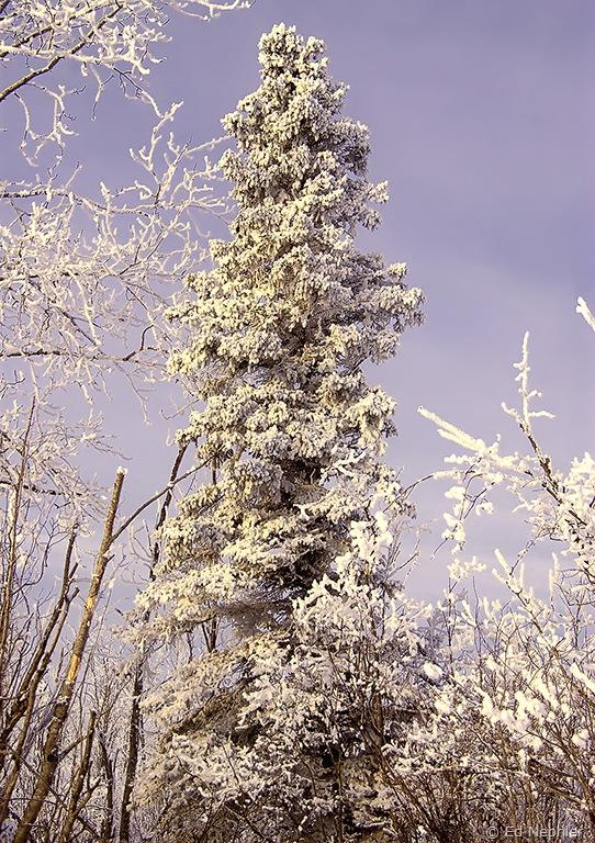 Tree 012510.01.1024