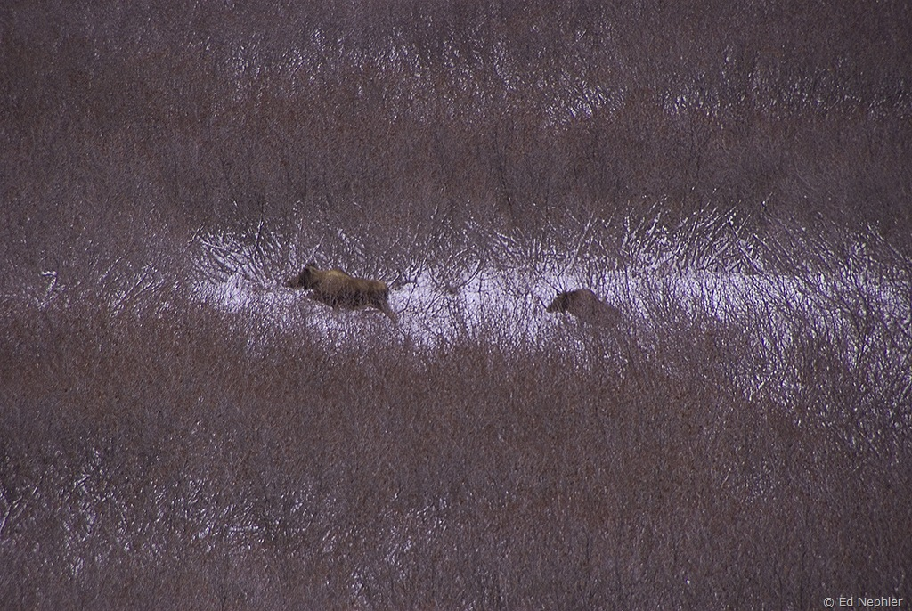 Moose 113009.01.1024