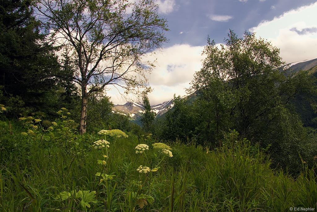 Hope - Palmer Creek Rd Views 072910.06.1024