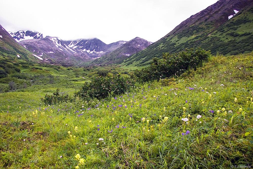 Hope - Palmer Creek Rd Views 072910.16.1024