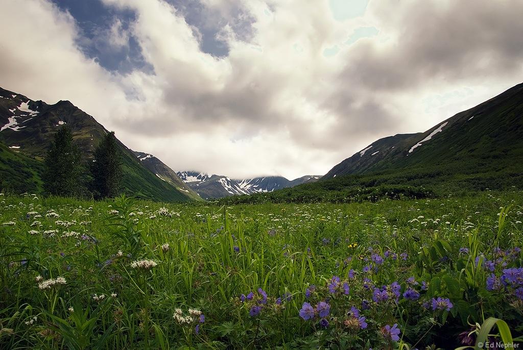 Wild Flower View 072910.01.1024