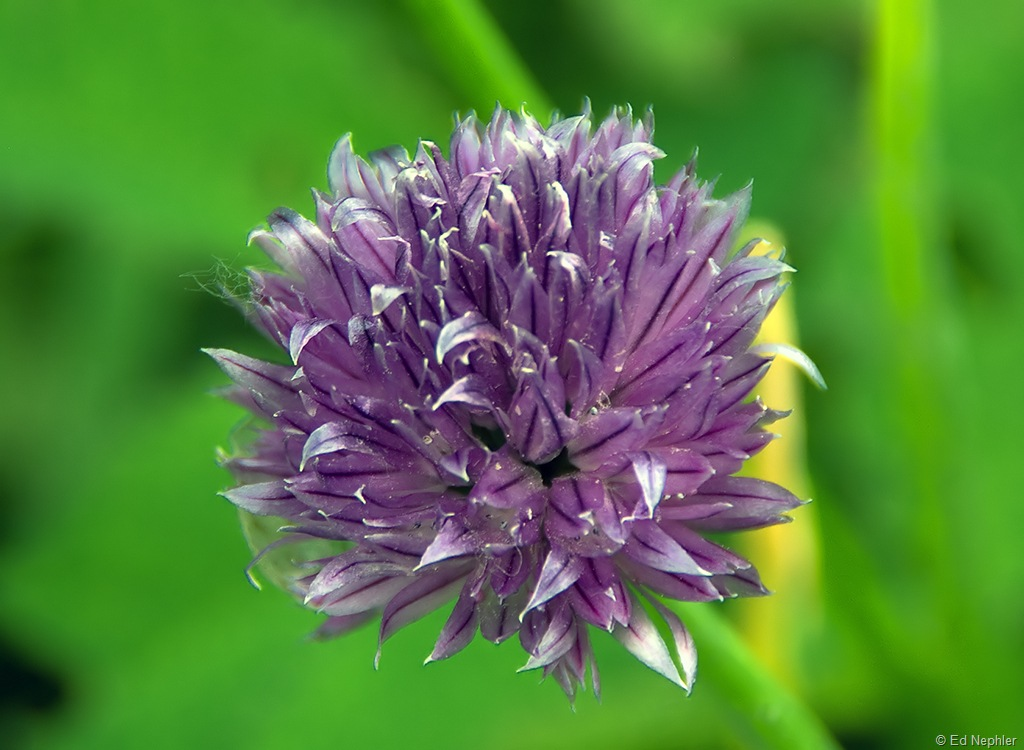 Wild Flower 072910.02.1024