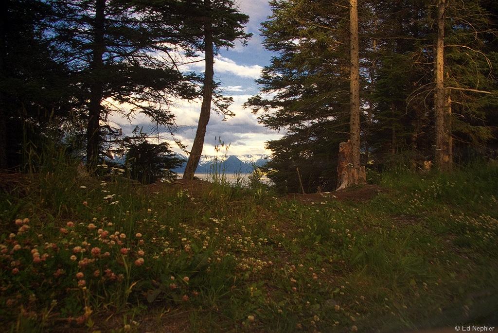 Tent Window View 073010.01.1024