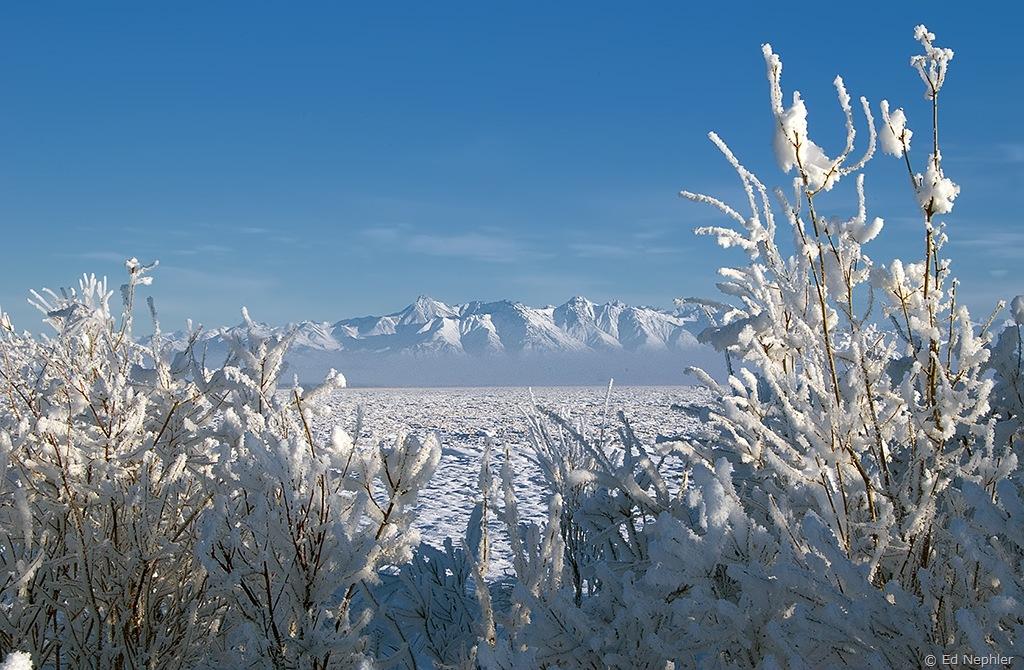Mountains thru Hoarfrost 012410.01.1024