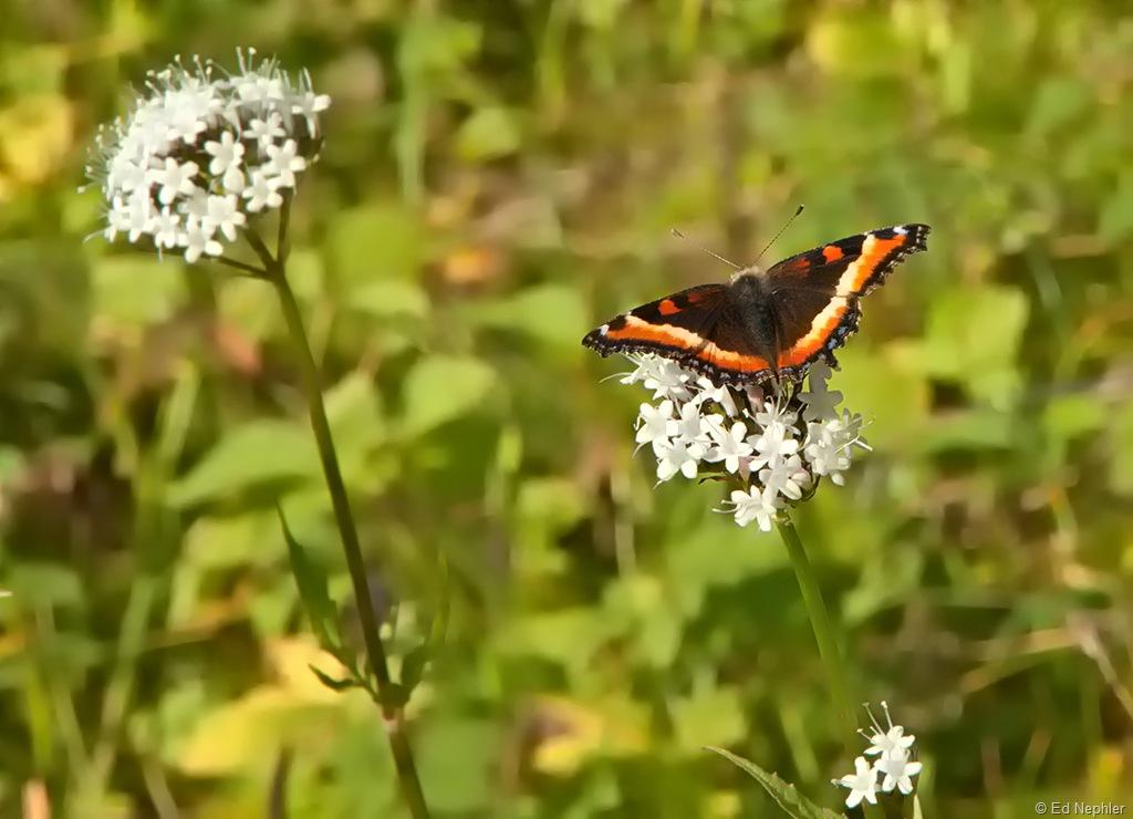Butterfly 082510.01.1024