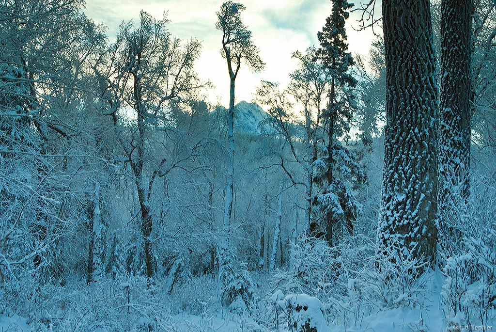 Pioneer Peak Through The Trees 120810.01.1024