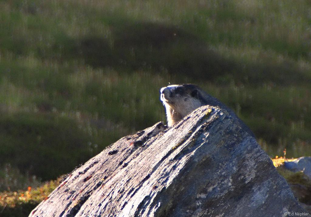 Marmot 082510.01.1024