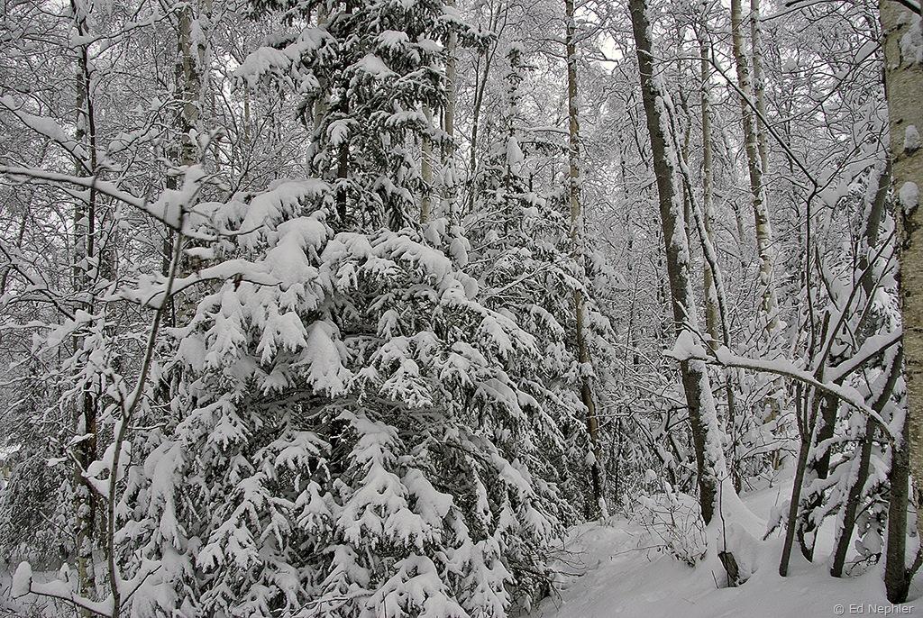 Woods 121709.01.1024