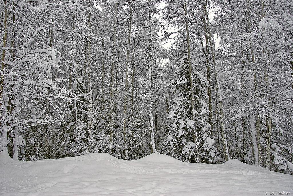 Woods 121709.02.1024
