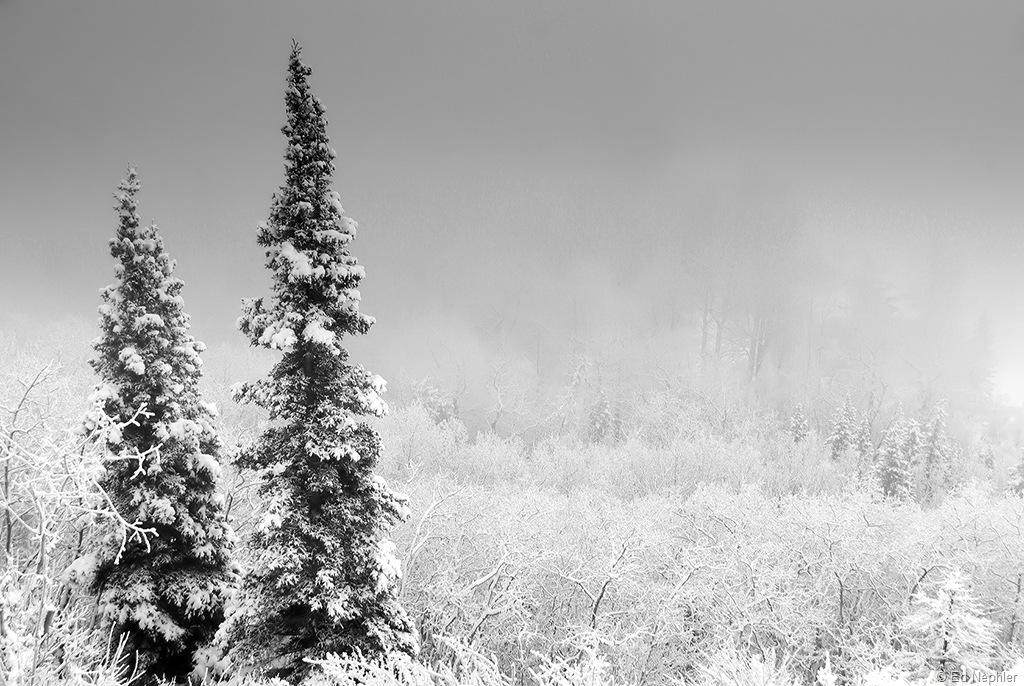 Foggy n Frosty BW 120810.01.1024