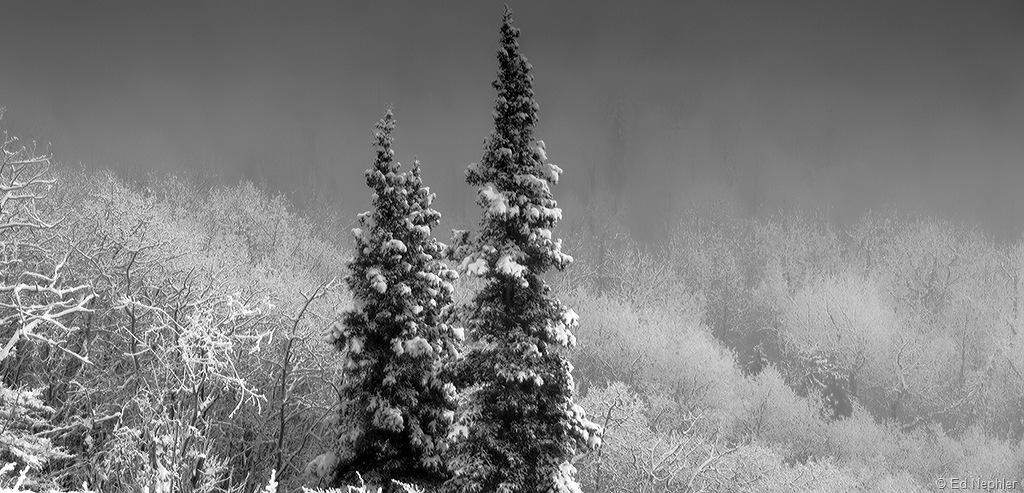 Foggy n Frosty BW 120810.02.1024