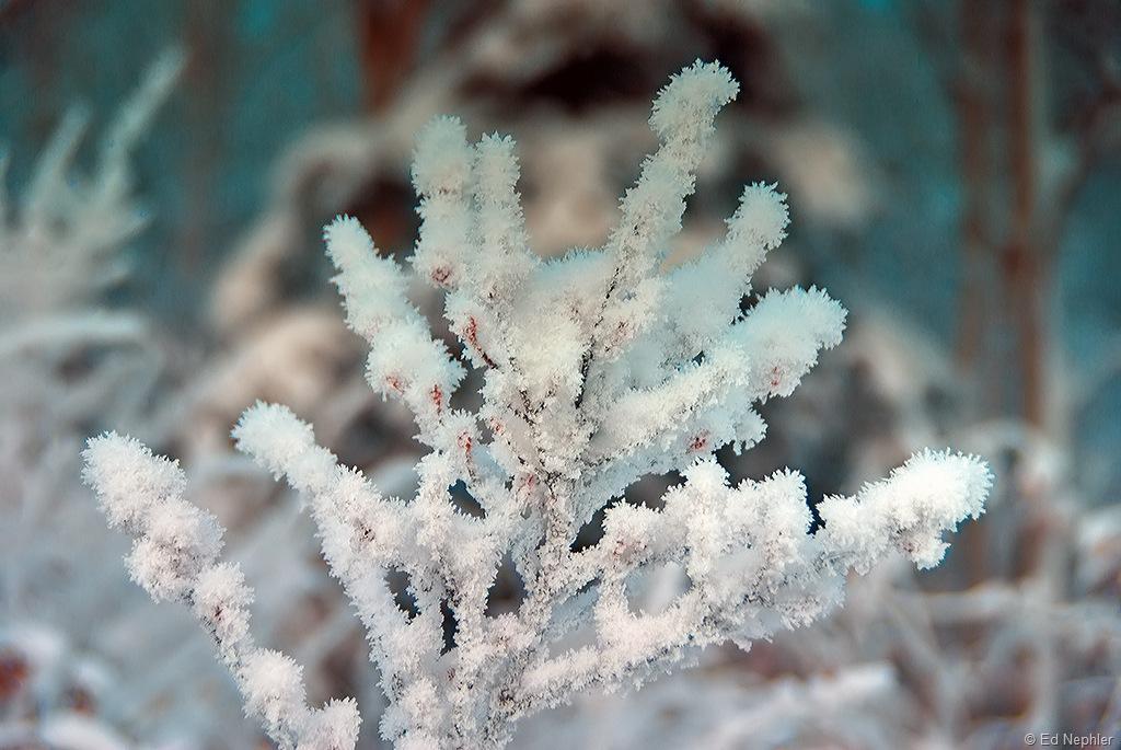 Hoar Frost 120810.01.1024